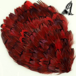 Tocados de Plumas de Faisán Rojo y Negro