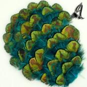 Tocados de Plumas Pavo Real Verdes y Azules